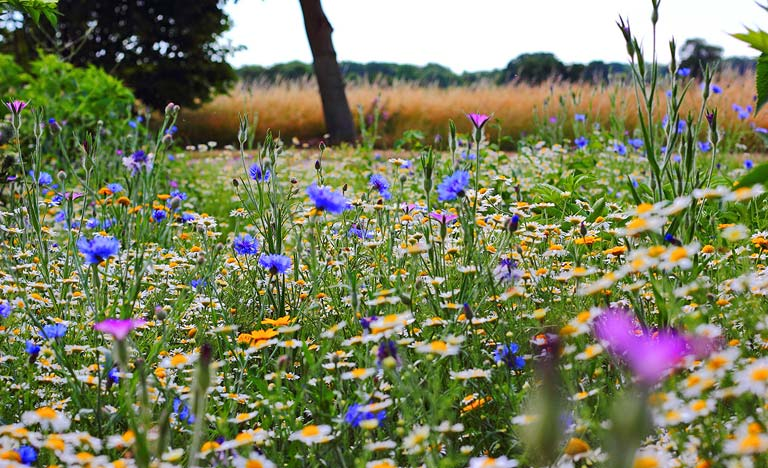 Summer meadow full of colourful wildflowers