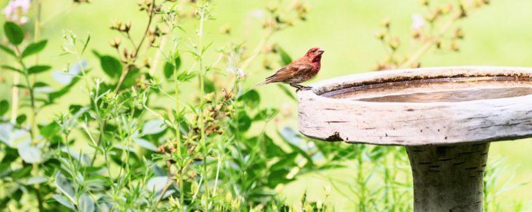 Bird sitting on the edge of a birdbath in the garden.