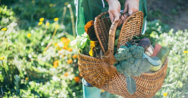 Person with green apron carrying a woven basket full of vegetables.