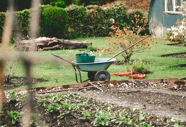 A vegetable garden with a wheelbarrow
